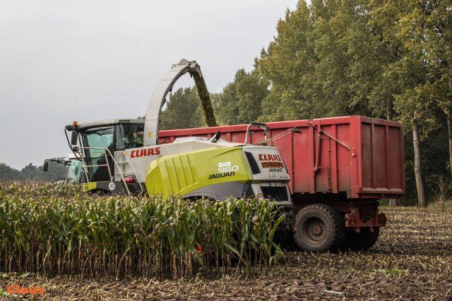 Landbouwer Cools uit Meerhout, België5