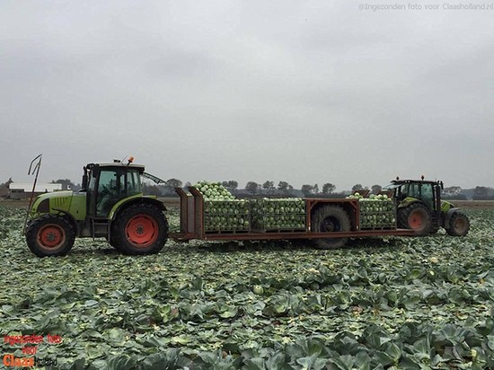 Met Claas tractoren in de kolenteelt.