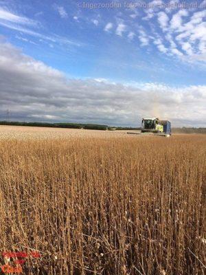 Oogsten in Engeland, Harvest in England