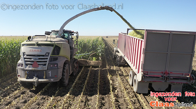 CLAAS Jaguars TT in the corn in South Oregon, USA.