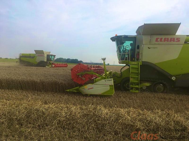 Blitterswijk agro in wintertarwe oogst