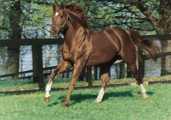 Image result for secretariat photo