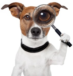 Claims Aid Consultants Public Adjusters jack russell terrier logo