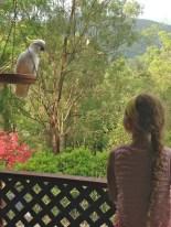 Cockatoo on bird feeder