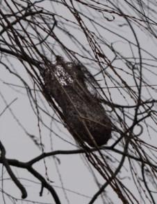 A Baltimore Oriole nest.