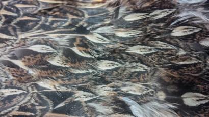 Ruffed Grouse; female; mantle