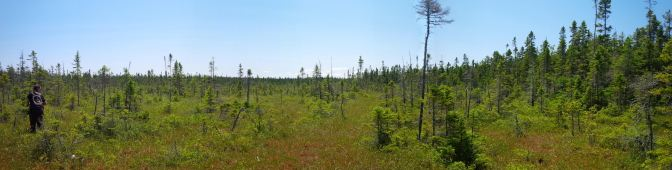 A bog in the Chignecto Isthmus, NB