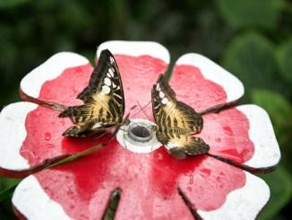 farfalla a casa delle farfalle