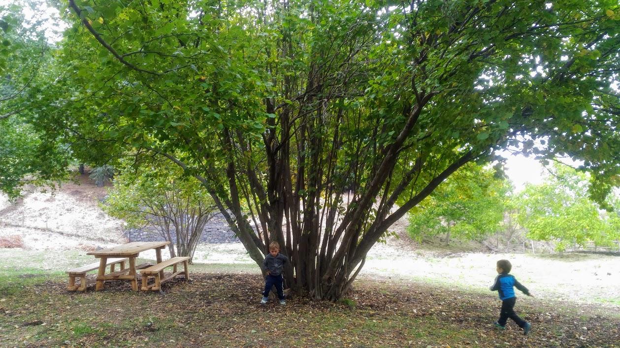 giochiamo nel parco dell'Etna Area pic-nic
