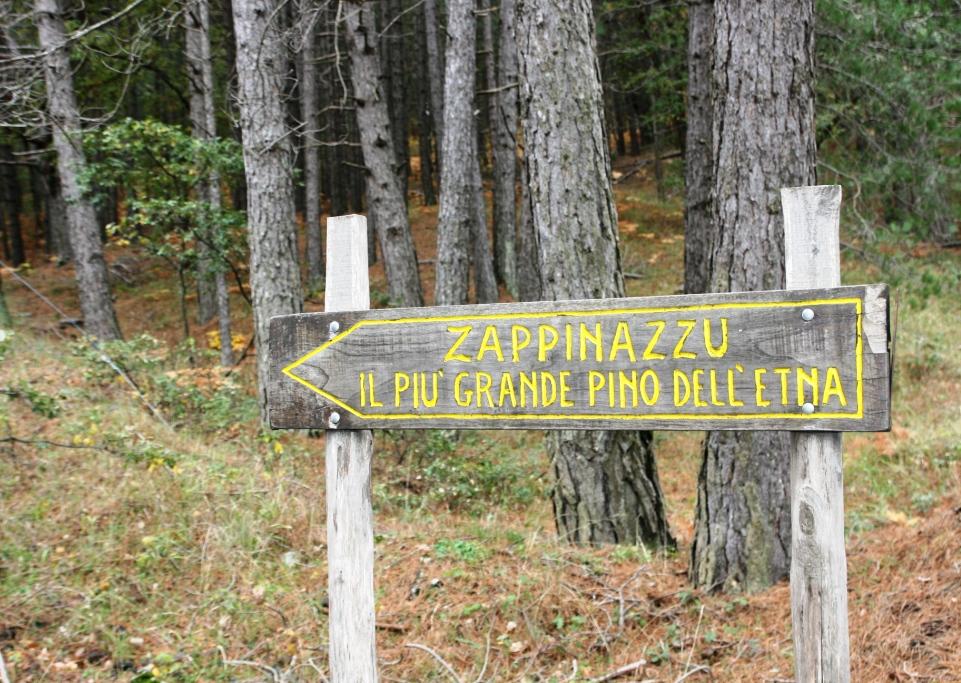 indicazione per lo zappinazzu pino secolare dell'etna a nord