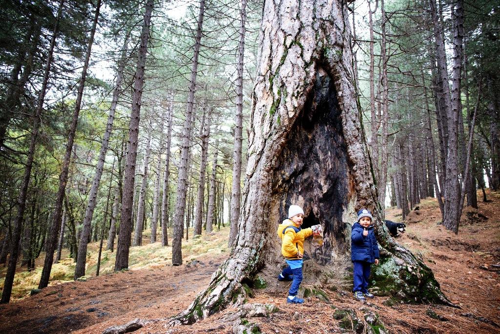 bambini che giocano vicino ad un albero in un bosco del parco dell'etna in sicilia durante una giornata invernale