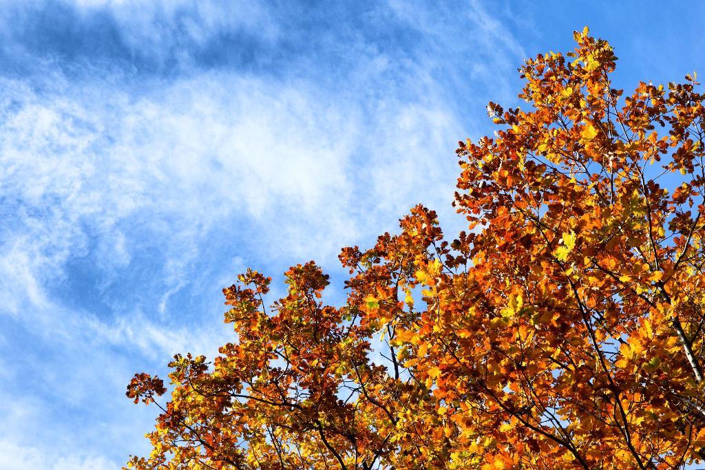 foglie e cielo in uno dei più bei sentieri dell'etna