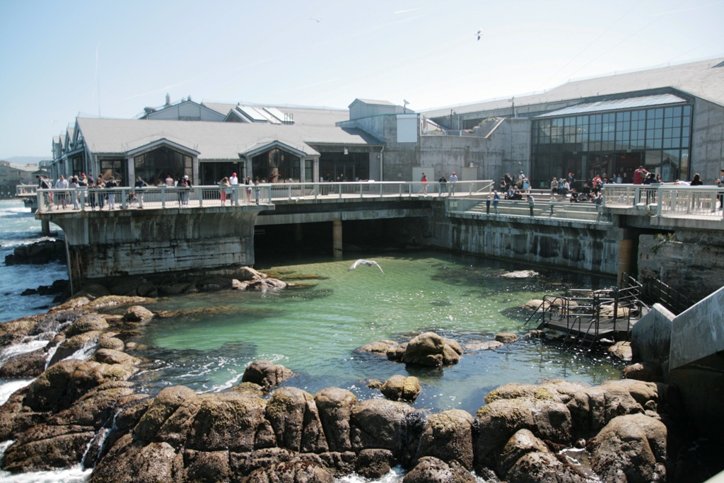 vasca esterna dell'acquario di monterey luogo ideale per visitare la California con i bambini