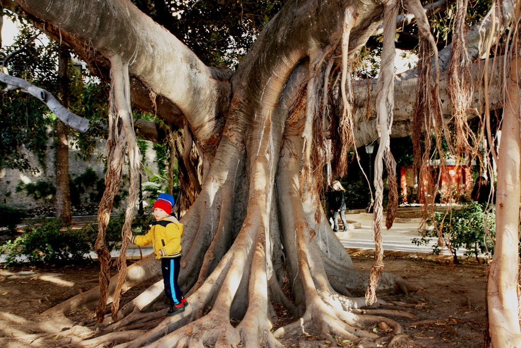 bambino che gioca sotto un albero di ficus a siracusa