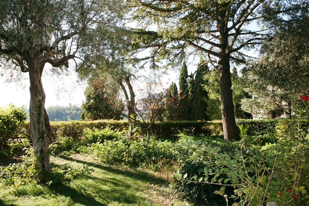alberi della villa di taormina in sicilia