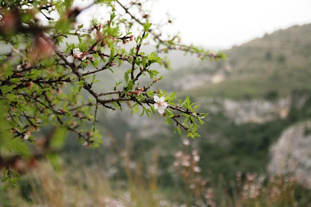 mandorlo in fiore a Pantalica
