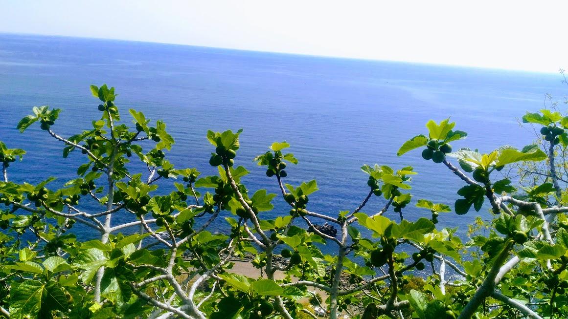 vista mare da un sentiero trekking