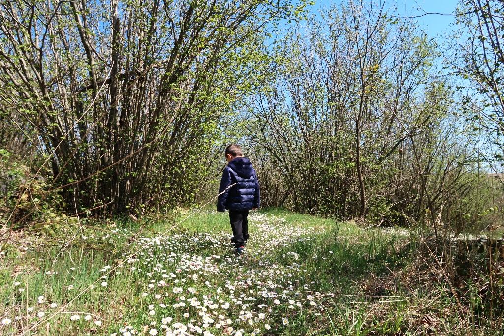 un bambino in un bosco di noccioli