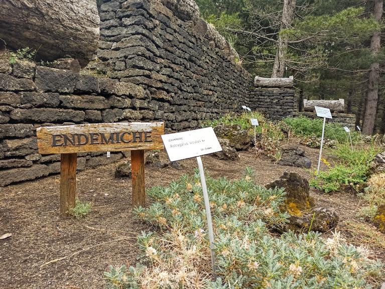 specie endemiche dell'Etna