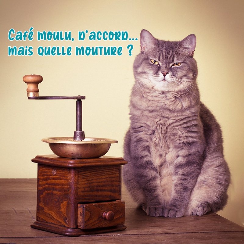 Un chat assis à côté d'un ancien moulin à café