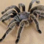 Rêves : rêver d'araignée
