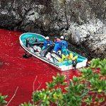 Notre planète : Taiji, la baie de la honte