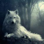 Interprétation du rêve de Maëva : les loups et la forêt
