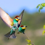 Rêves : Que signifie rêver d'oiseaux?
