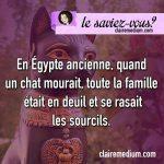 Le saviez-vous ? les chats et l'Egypte