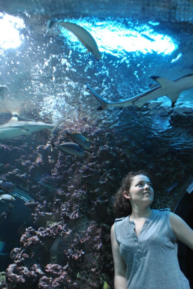aquarium de bergen norvège