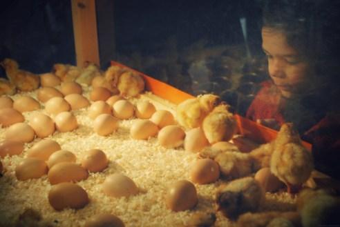fête du poulet à Janzé Rennes