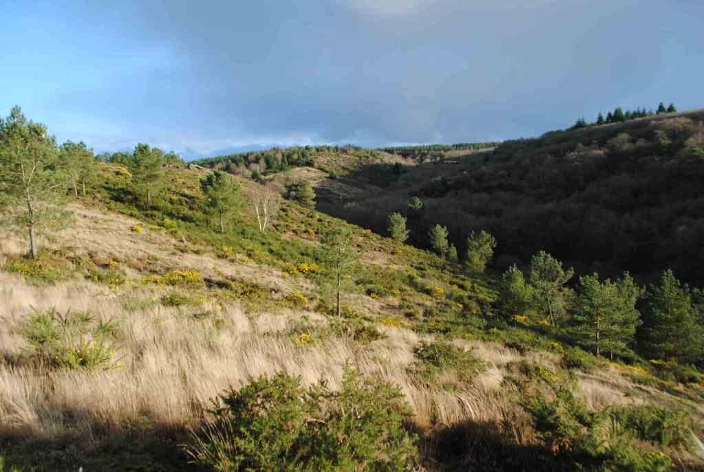 forêt de brocéliande rennes bretagne