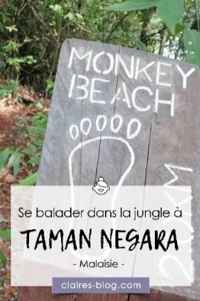 Se balader dans la jungle de Tamamn Negara - Malaisie #malaisie #penang #tamannegara #jungle #asie #voyage