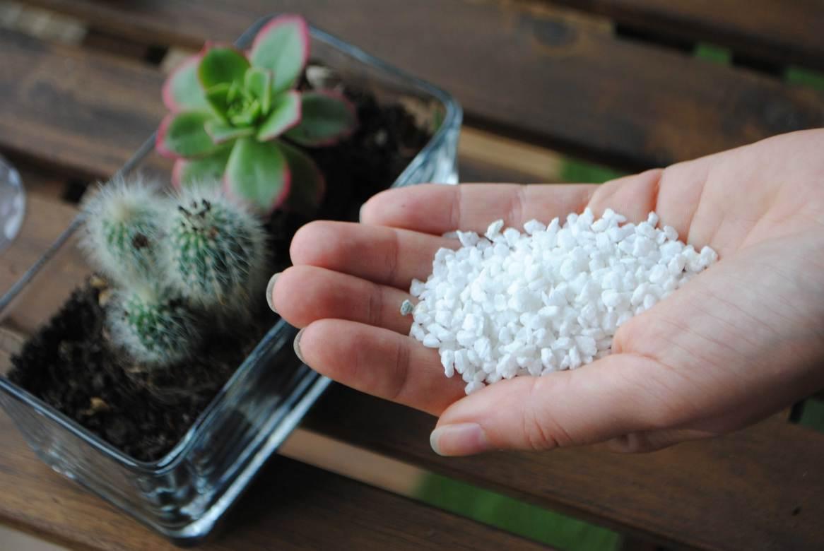 cactus deco balcon jardin diy exterieur plante (1)