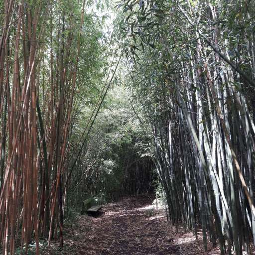 bambouserai-yves-rocher-bretagne-la-gacilly
