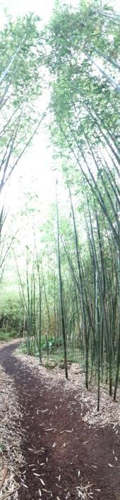 bambouseraie yves rocher bretagne