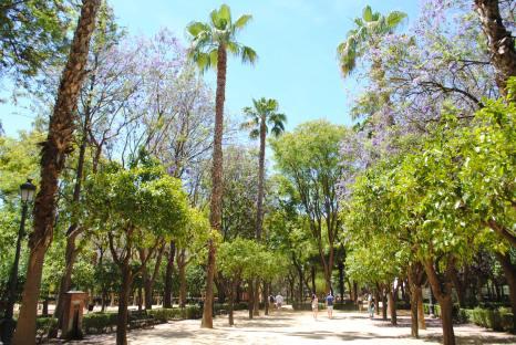 seville espagne andalousie top 10 (3)