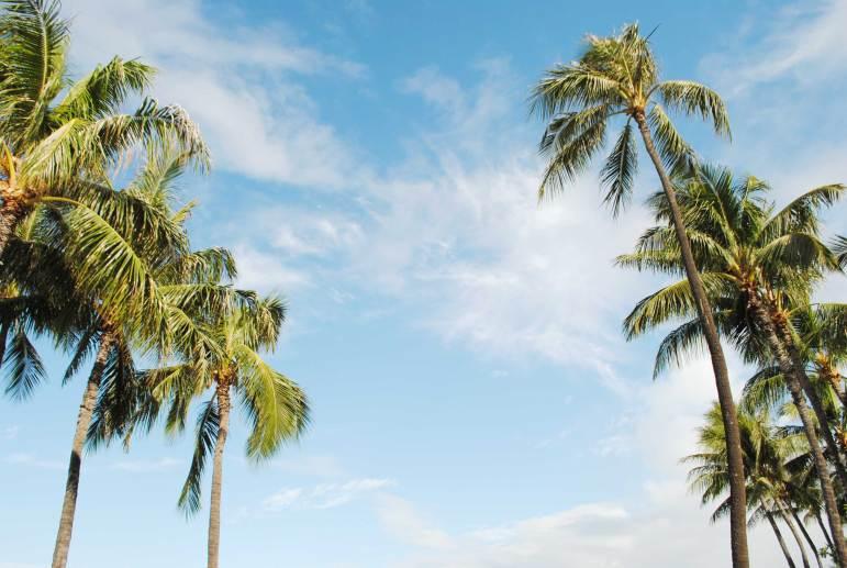 Oahu-Hawai-quoi-faire-(28)