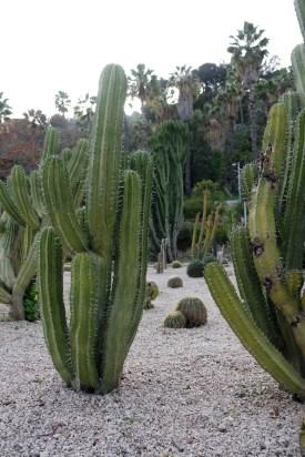 Barcelone-Espagne-montjuic mosen jardines cactus
