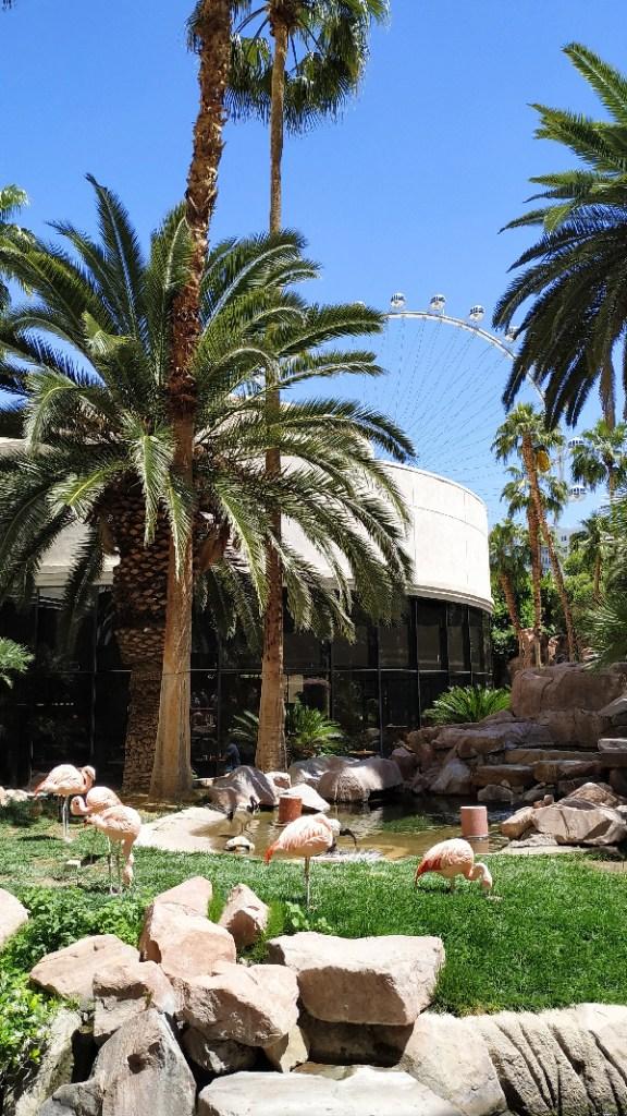 hotel flamingo flamand rose las vegas (2)