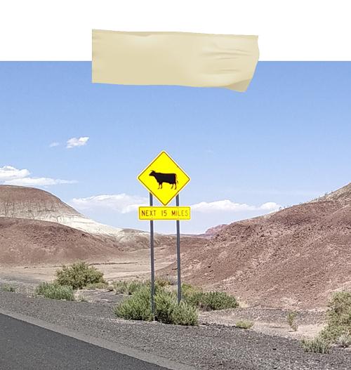 vache grand canyon