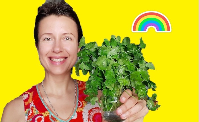 How to keep aromatic herbs fresh for longer? #rawvegan