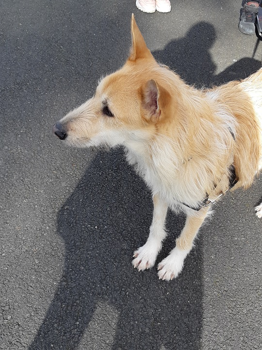 Rescued dog story or how the puppy Caramel from Africa ended up in France