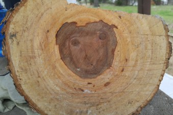 Camp mascot, found in the firewood