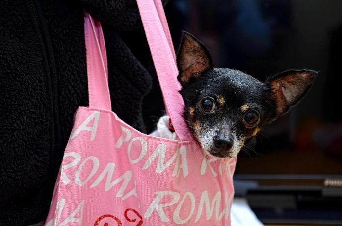 Why Some Dogs Are Not Allowed on Planes