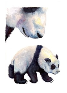 Watercolor of pandas