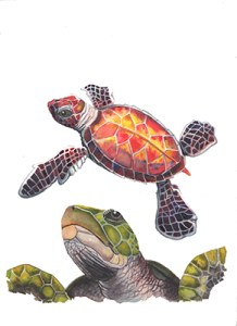 watercolor painting of turtles