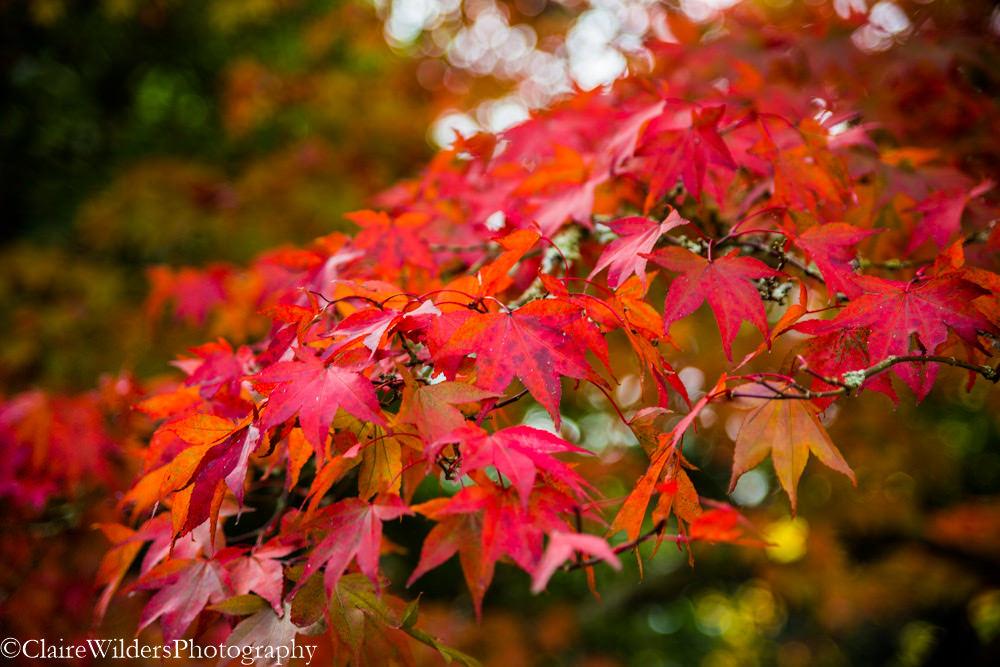 Autumn Photography sessions Horsham