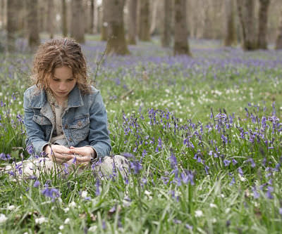 Bluebell woods, Sussex