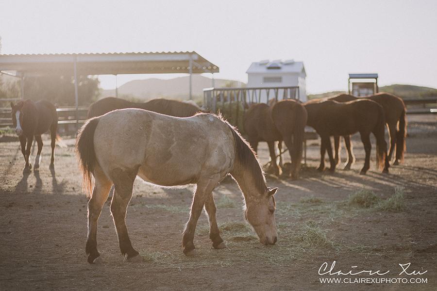 Rocking_K_Ranch-07